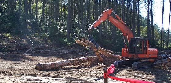 Planned tree felling