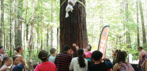Redwoods Childrens Day Pinata